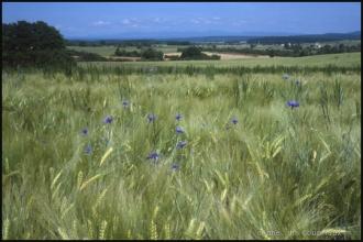 2000-Menoux-paysages-89.jpg