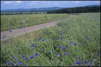 2000-Menoux-paysages-94.jpg