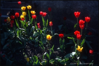 2003_Menoux89.jpg