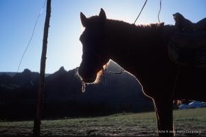 1999-aMongolie-387