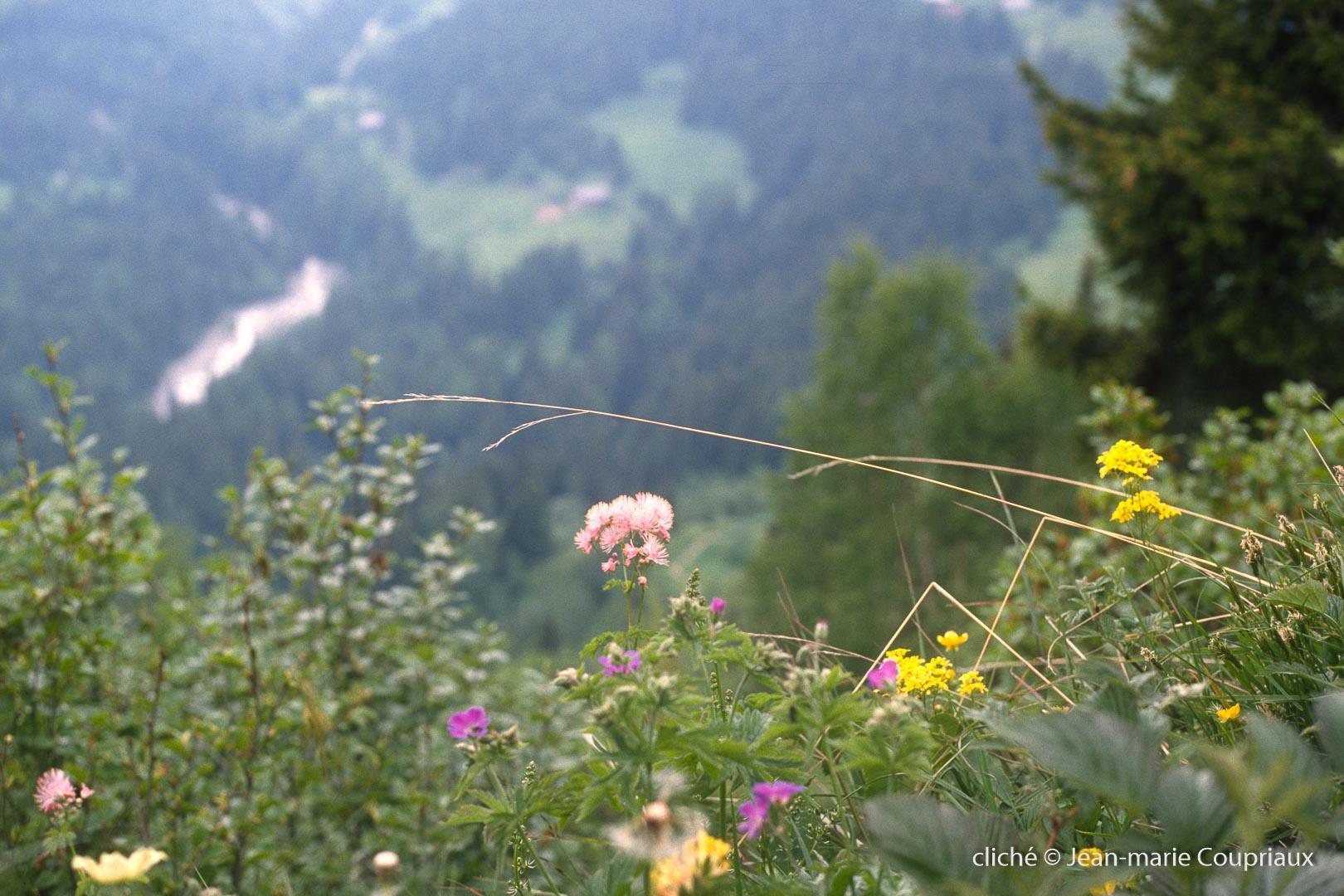 nature_1989-Loriaz-1