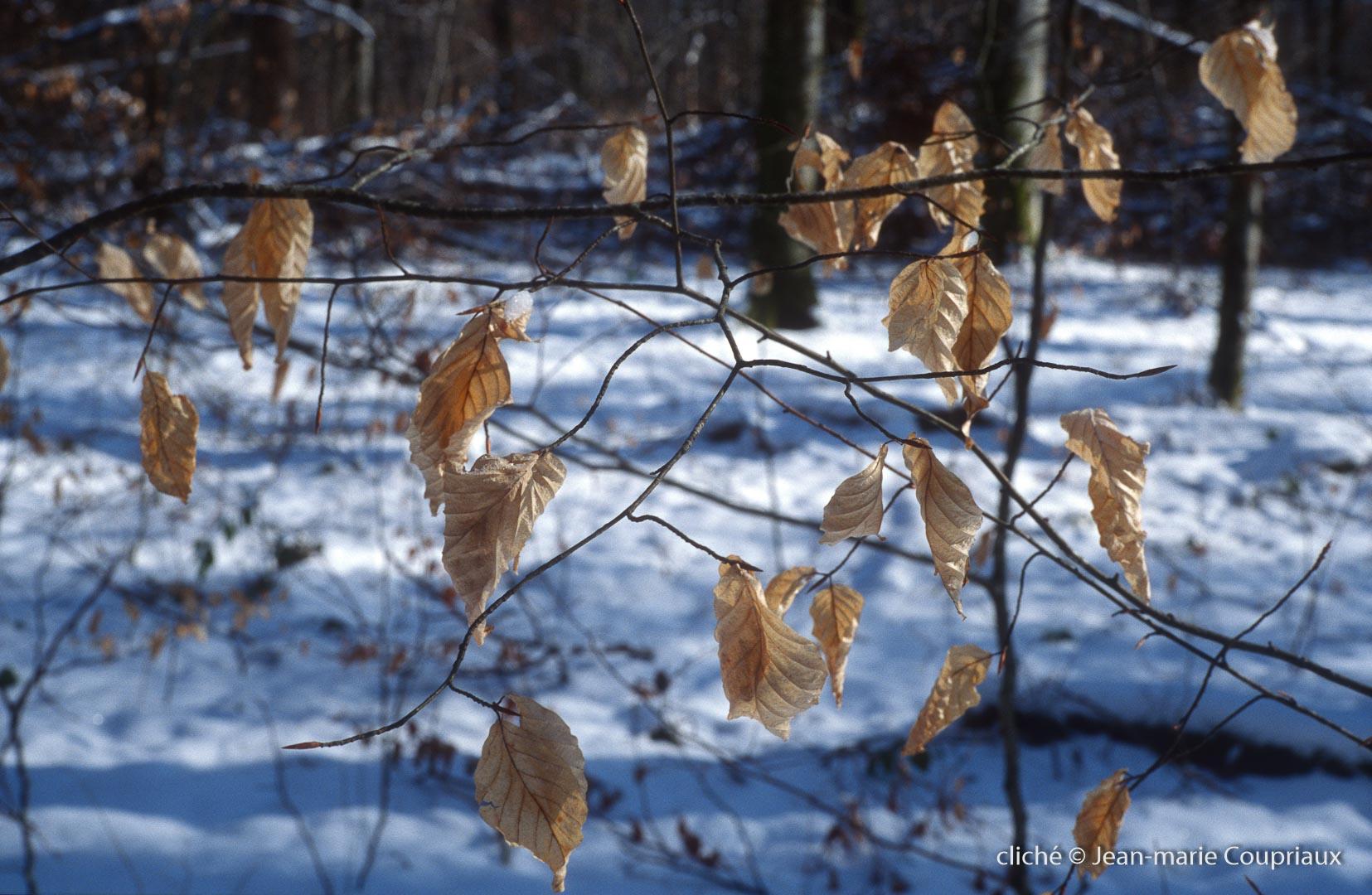 022_Nature-Menoux-21