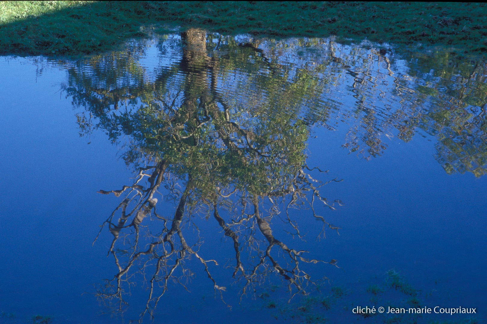 060_Nature-Menoux-49