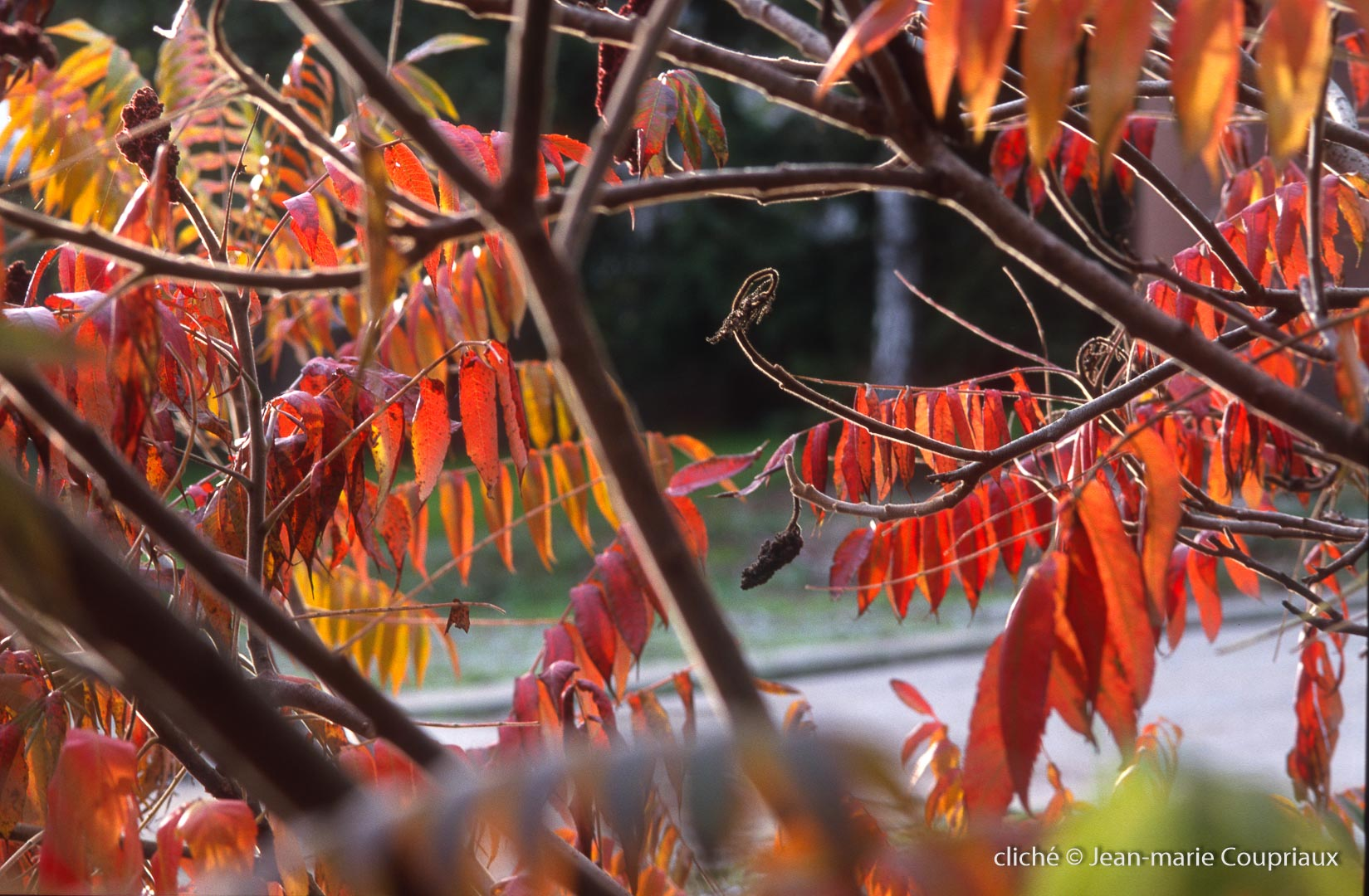069_Nature-Menoux-61