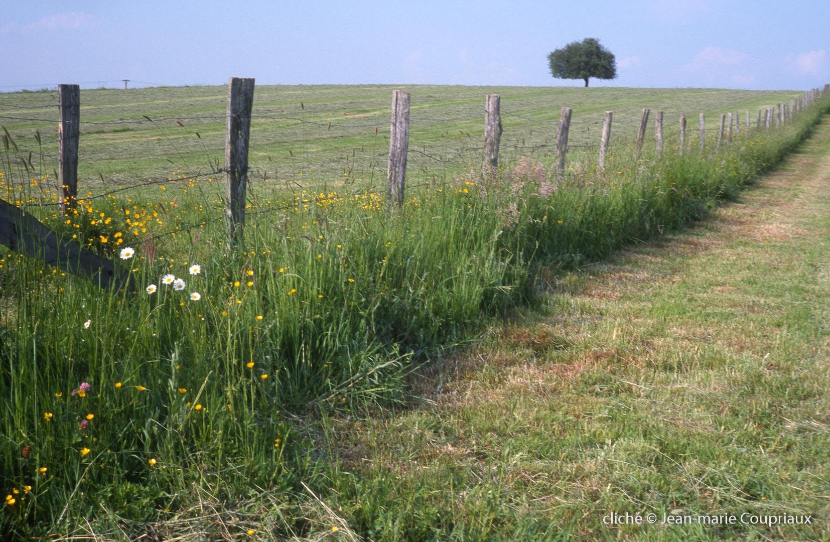 Agri-paysage-11