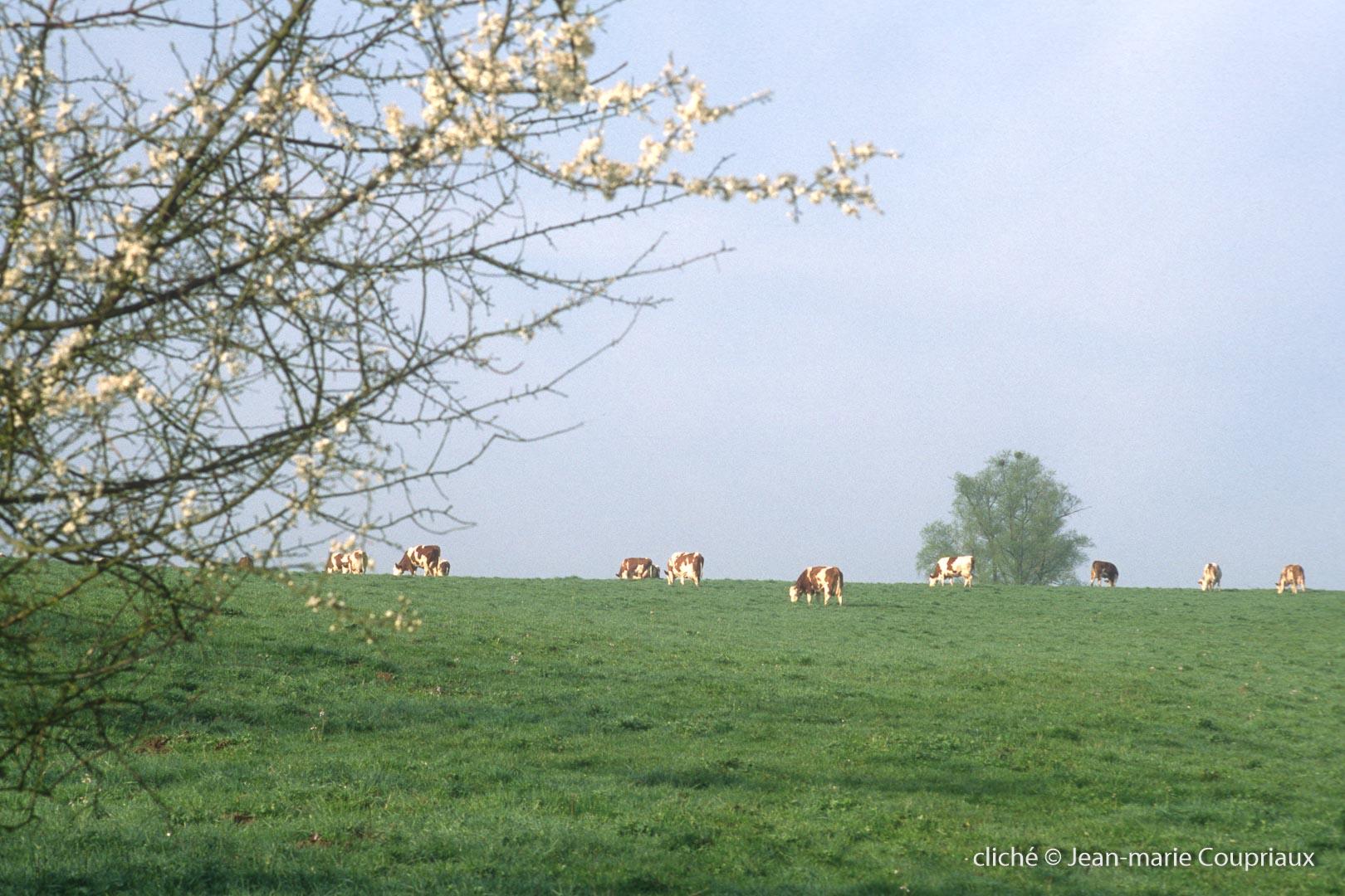 Agri-paysage-5