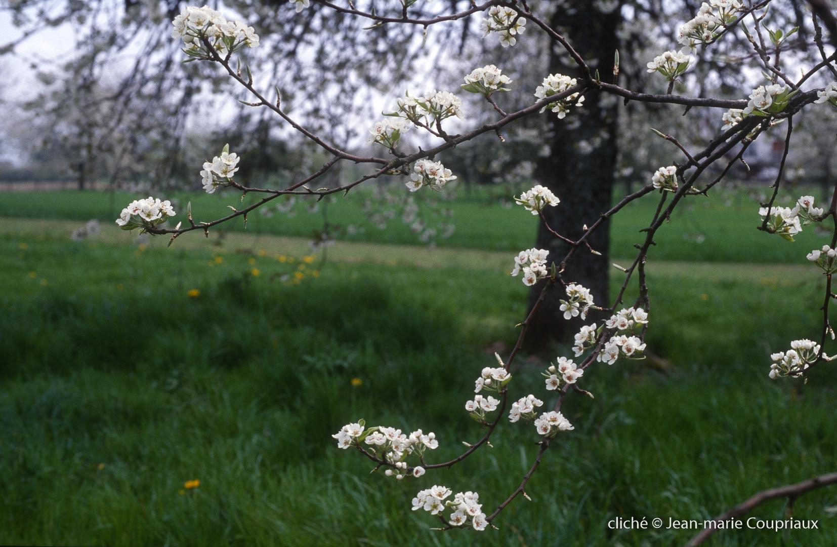 Fleurs-div-144-4-1