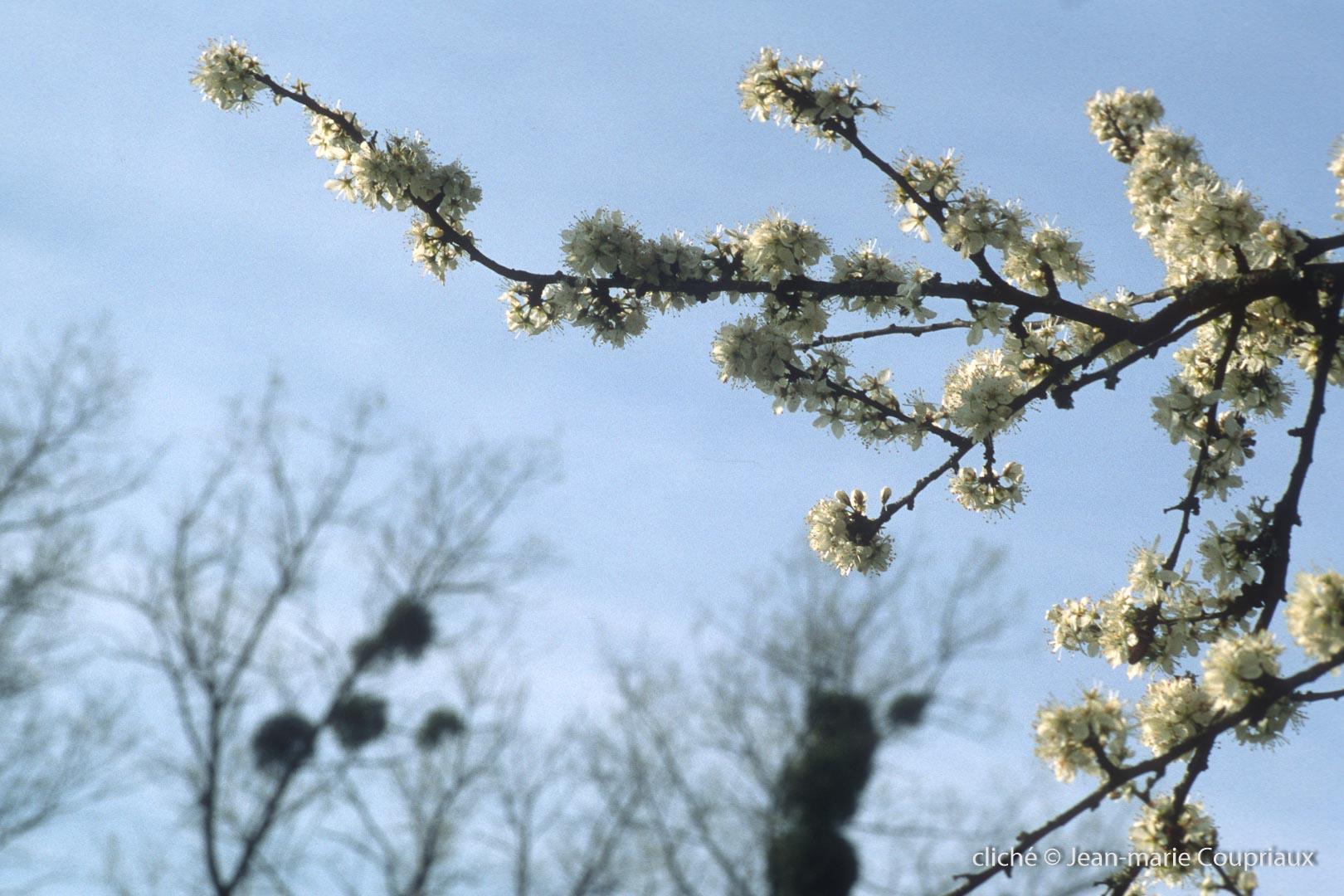 Fleurs-div-145-10