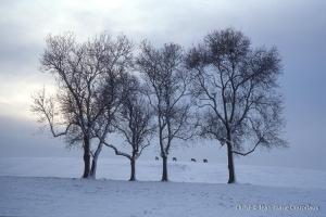 014_Nature-Hte-Saone