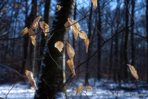 021_Nature-Menoux-20