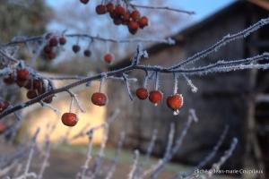 031_Nature-Menoux-24