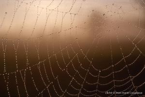 039_Nature-Menoux-29