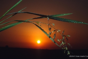 043_Nature-Menoux-33