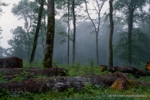 046_Nature-Menoux-36