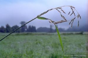 053_Nature-Menoux-43