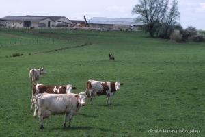 Agri-paysage-3