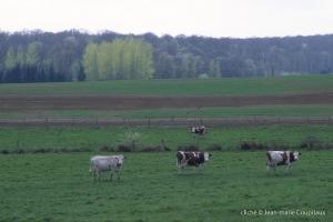 Agri-paysage-4