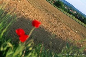 Agri_cultures-33