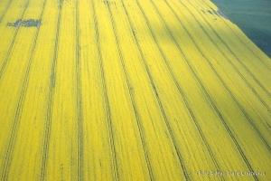 Agri_cultures-384-8