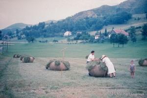 Agri_elevage_1958-1