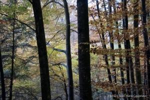 Bois_2009-2