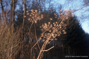Fleurs-Art-28