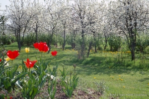 Fleurs-div-140-1