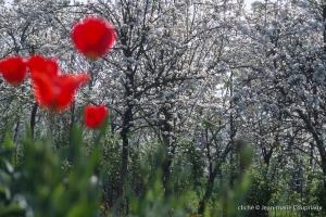 Fleurs-div-140