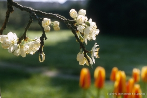Fleurs-div-141