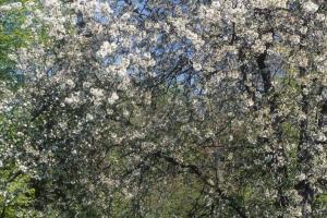 Fleurs-div-144-8