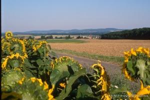 agri_tounesol-62