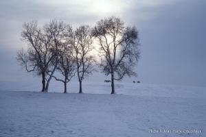 hiver-1