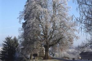 hiver-117
