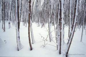 hiver-121