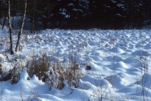 hiver-124