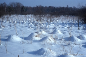 hiver-126