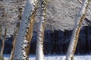hiver-15
