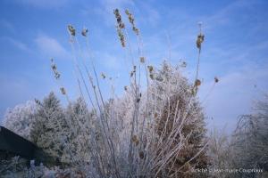 hiver-31