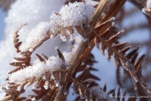 hiver-34-1