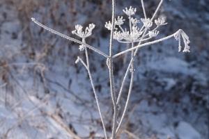 hiver-36