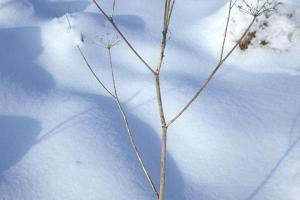 hiver-37