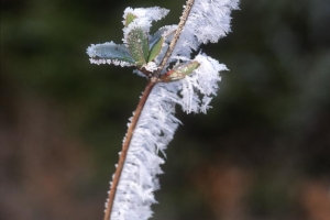 hiver-39