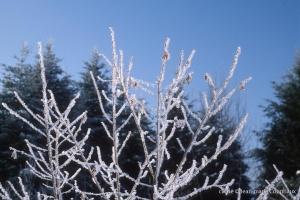 hiver-42