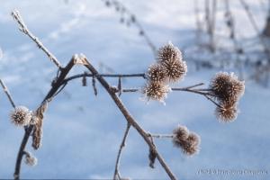 hiver-43