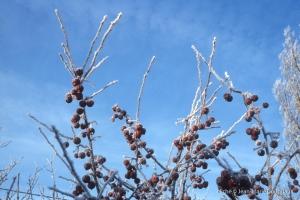 hiver-44