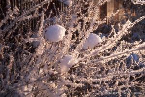 hiver-61