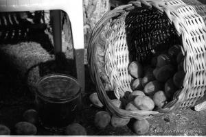 nature_1998-divers-8