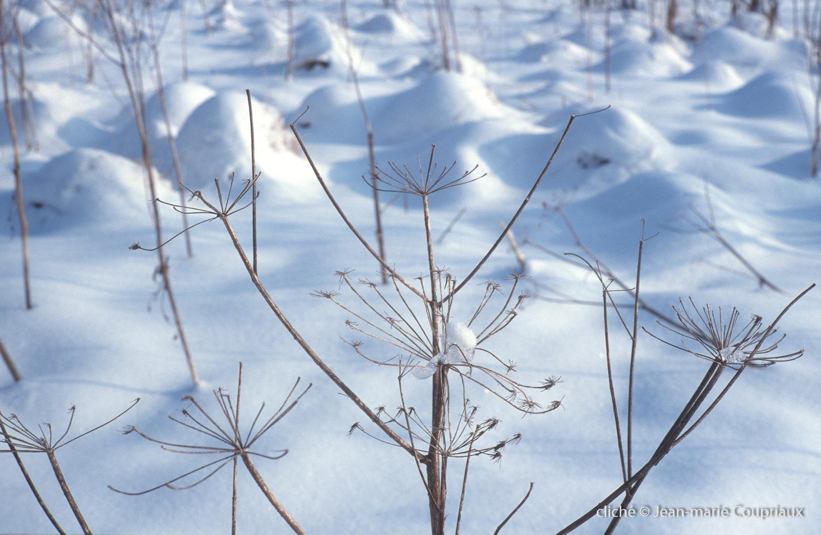 hiver-127