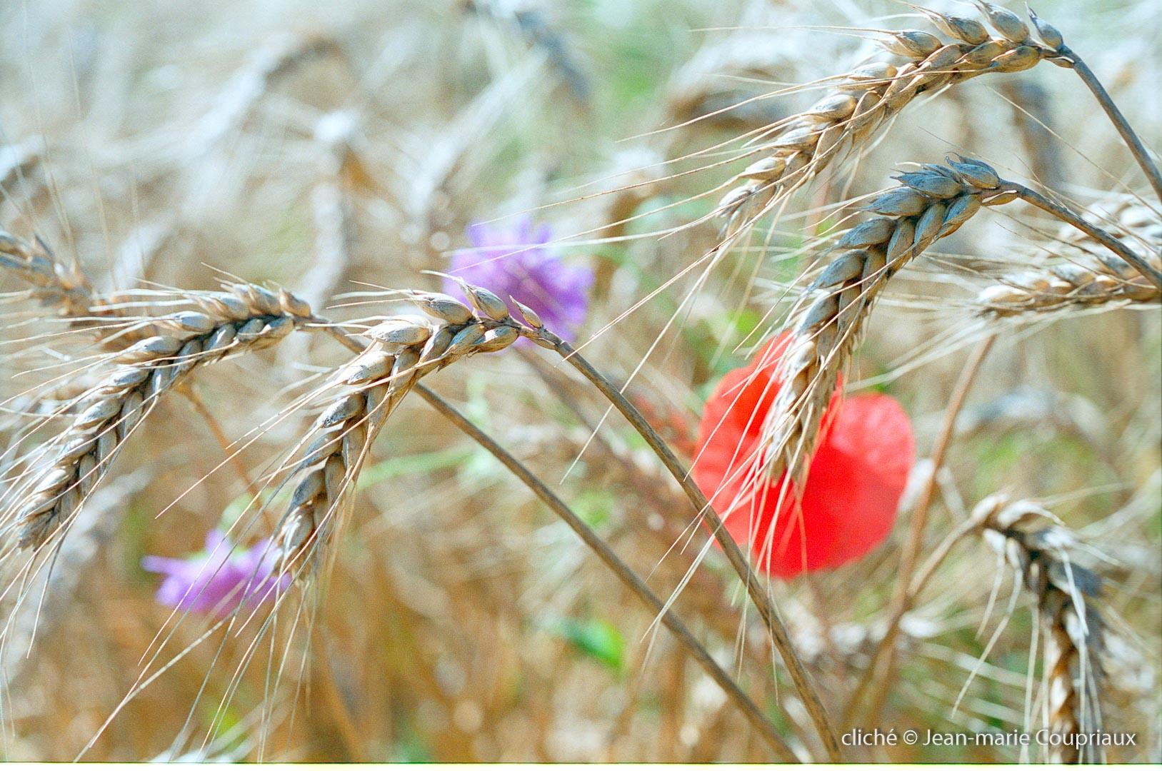 nature_1998-agri-5