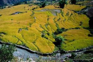 2000_Nepal-539